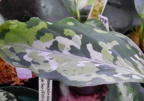 画像1: 青海苔