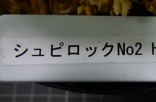 画像1: シュピロック No2